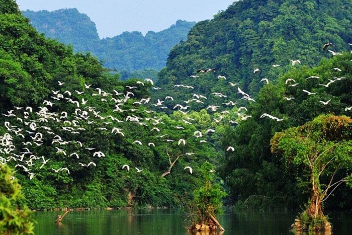 Santuario de aves Thung Nham en Ninh Binh