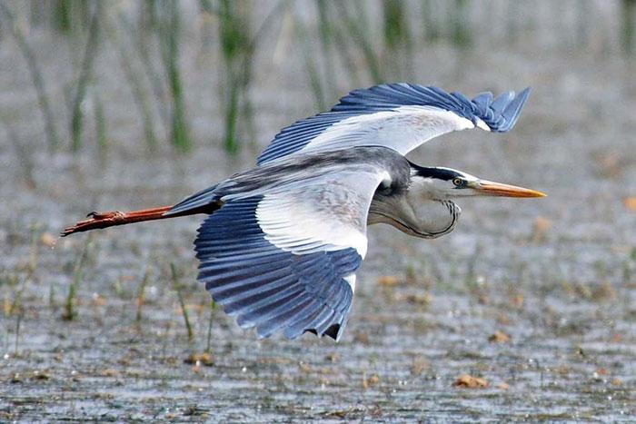 10-visitas-imperdibles-en-siemreap-santuario-de-aves