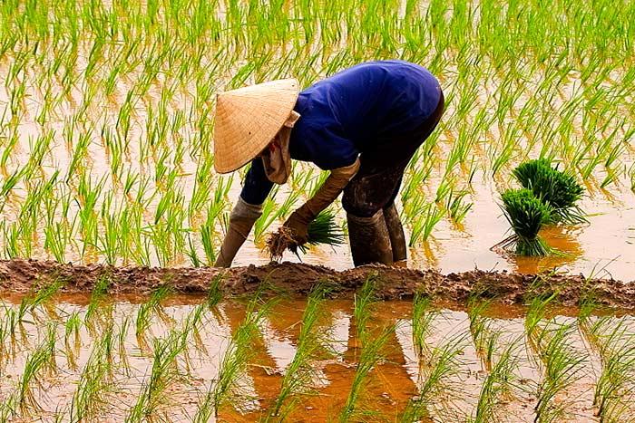 Viajar a Vietnam en temporada baja