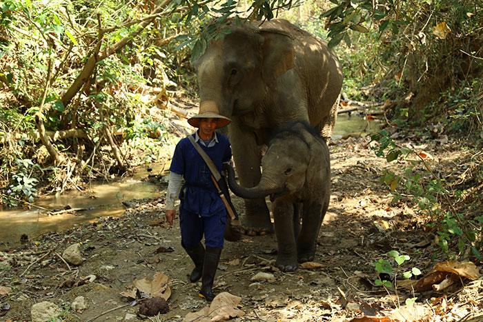 Paseo de elefantes en Mondolkiri