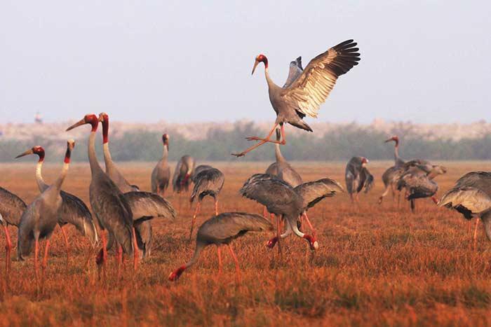 Parque de aves en el delta del Mekong Vietnam