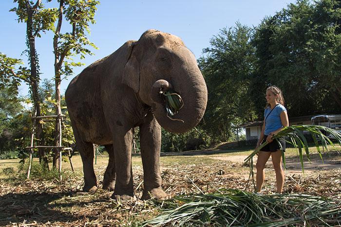 Alimentacion de elefantes en Luang Prabang Laos
