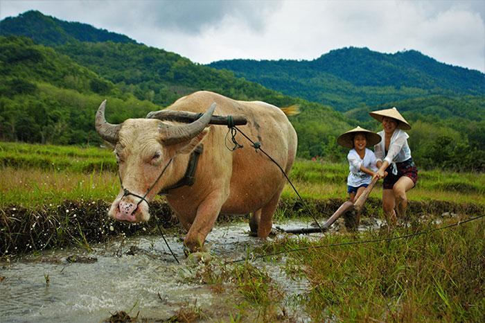 El ano nuevo Hmong