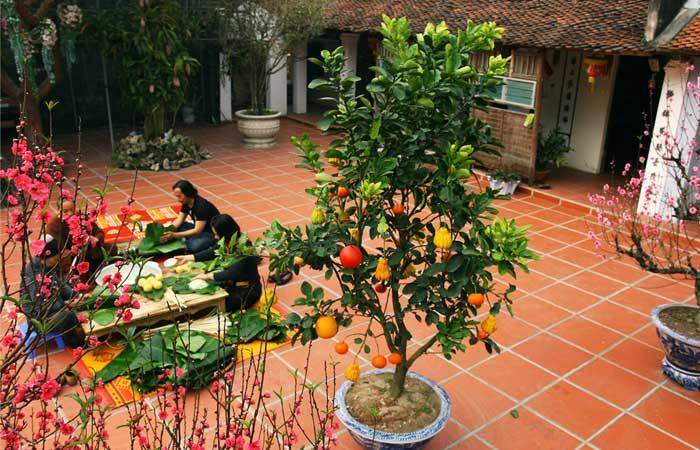 Ano nuevo vietnamita arbol Tet