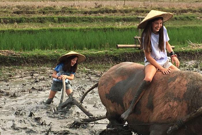 Arado en bufalo en Luang Prabang