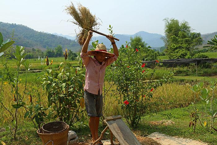 Batido de arroz en Luang Prabang