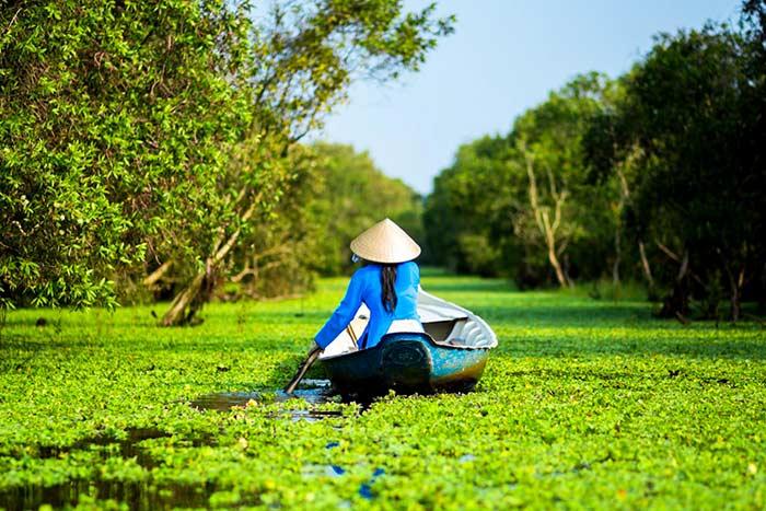 Bosque de cajeput en chau doc delta del Mekong