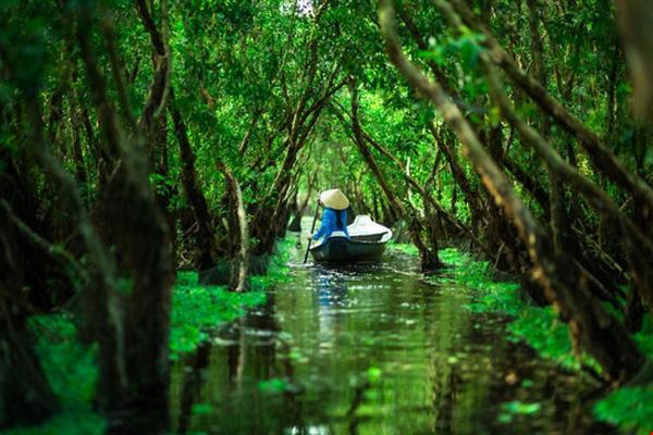 bosque-en-el-delta-mekong