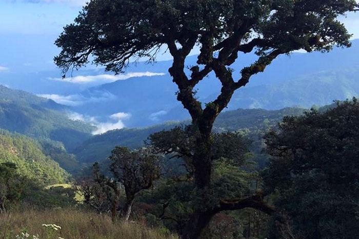 Caminata al monte Victoria en Myanmar