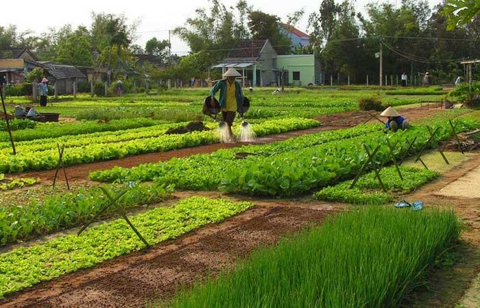 Riego de los campos de Tra Que en Hoi An