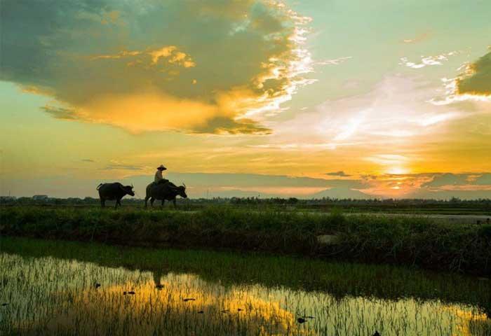 Tour en el campo de Hoi An Vietnam