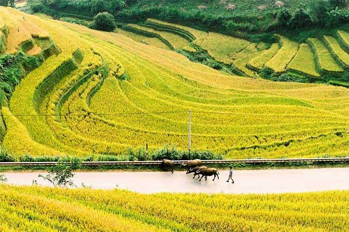 Arrozales en Mu Cang Chai Vietnam