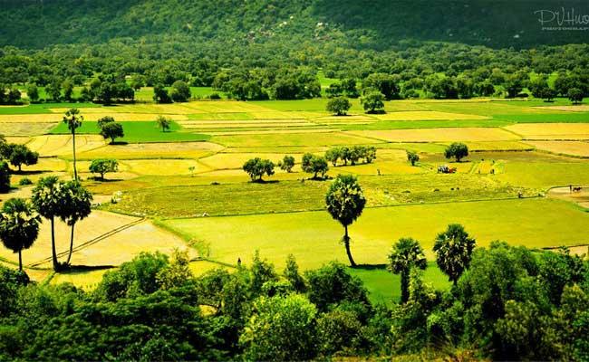 Campos de arroz de Ta Pa delta del mekong Vietnam