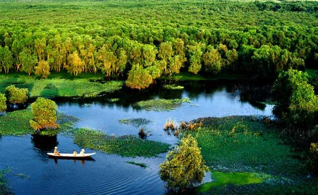 Bosque Tra Su en el delta del Mekong Vietnam