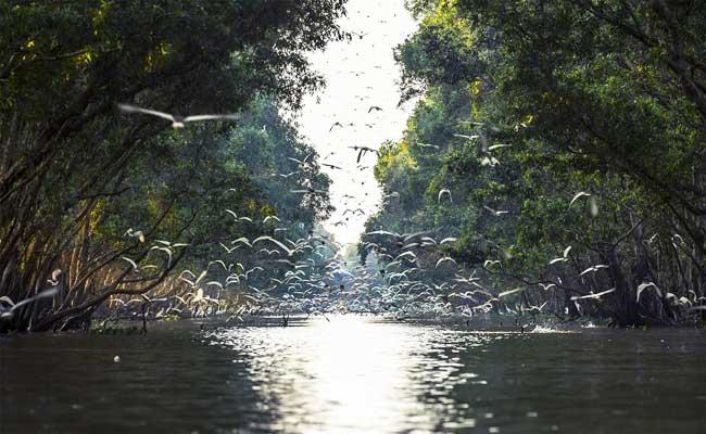 Parque Nacional Tram Chim delta del Mekong