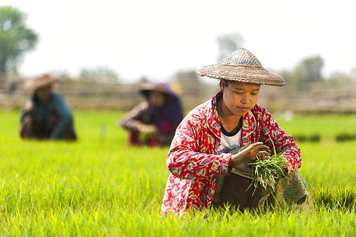 Pobladores birmanos en el campo