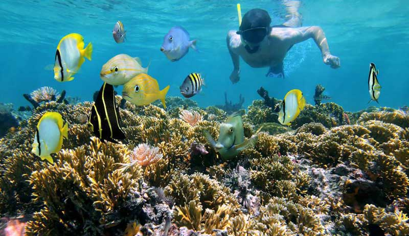 Buceo observacion de corales en la Isla Cham Vietnam