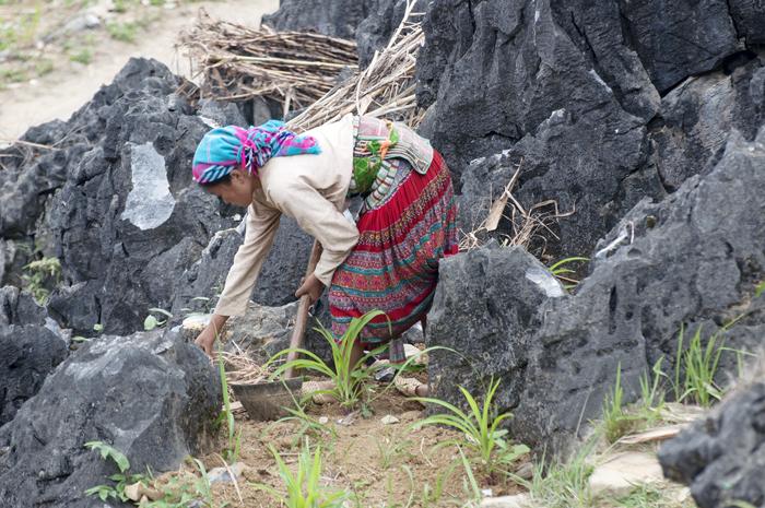 cultivo mais meseta dong van vietnam