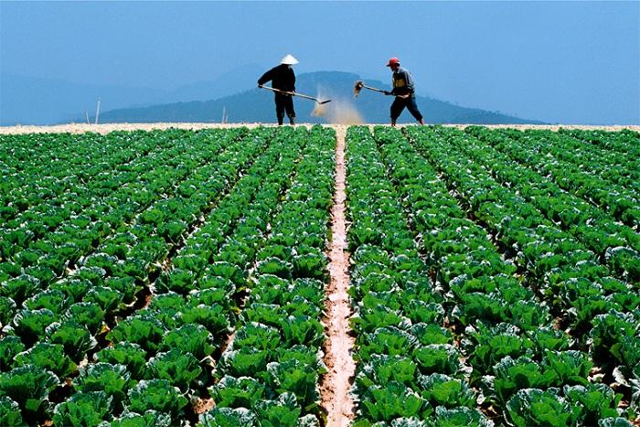 Horticultura en Dalat Vietanm