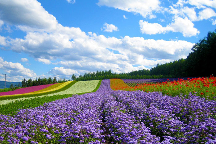 Campos de flores en Dalat Vietnam