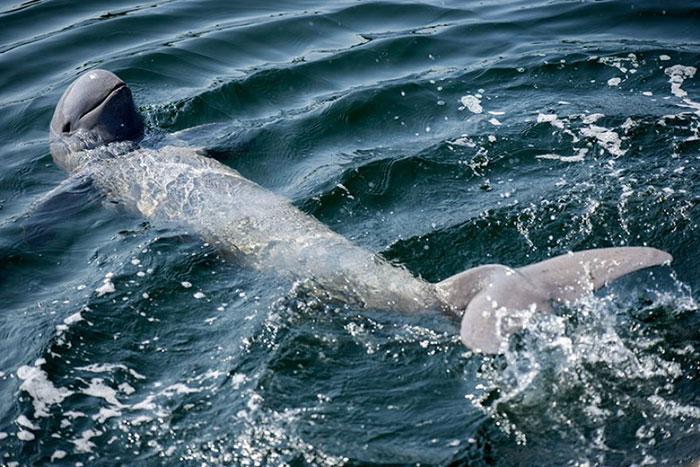 Delfines del rio Irrawaddy en Kratie
