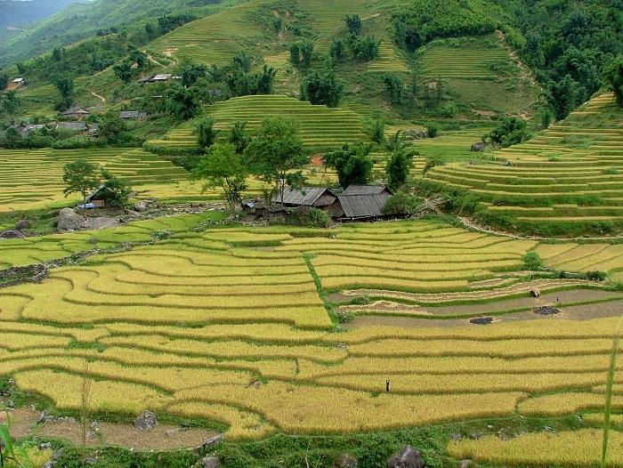Hermosas terrazas de arroz en Sapa Vietnam