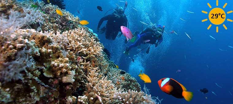 Donde viajar en Vietnam fondos marinos en Con Dao