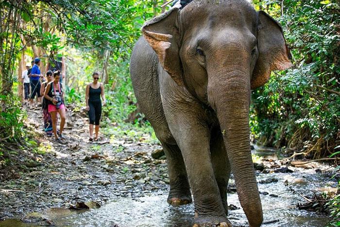 Elefantes en la jungla de Luang Prabang Laos