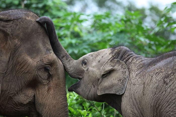 Elefantes en Luang Prabang Loas