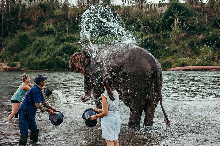 Encuentro con elefantes en Luang Prabang Laos