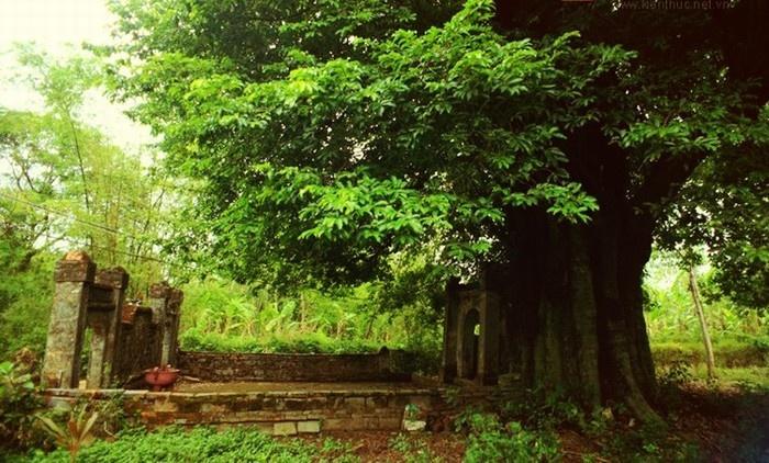 Entrada al pueblo tradicional de Phuoc Tich en Hue