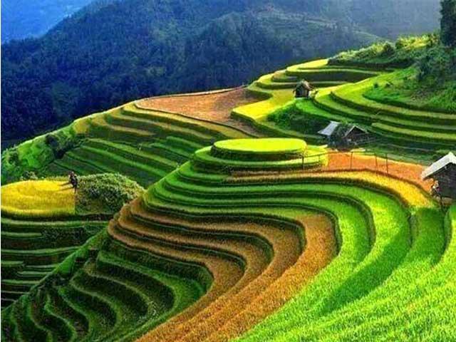 Terrazas de arroz Hmong