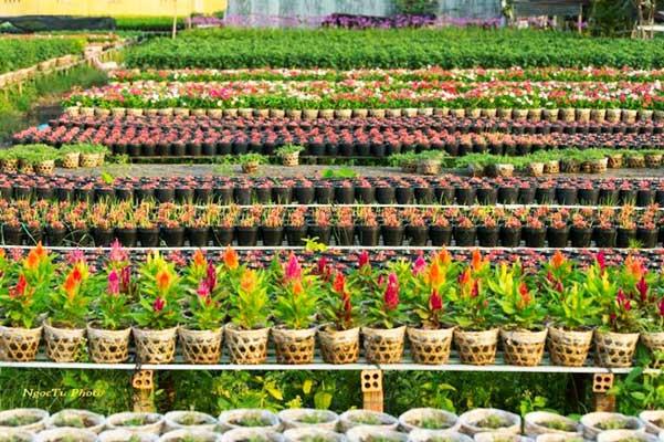 aldeas-de-flores