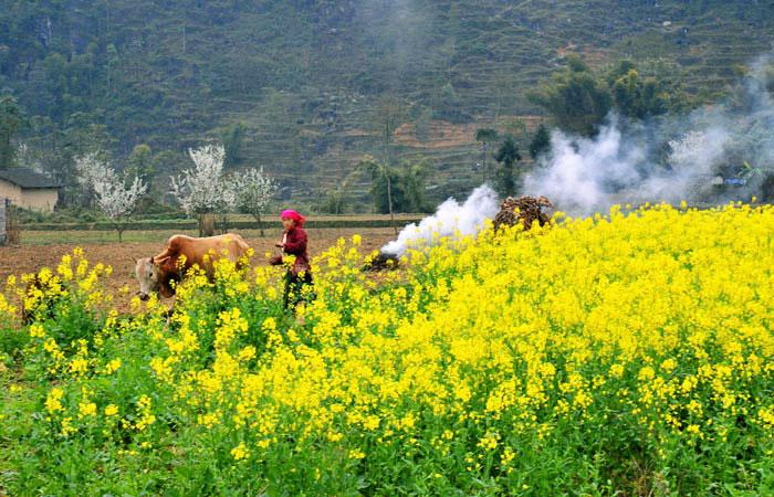 flores invierno ha giang vietnam