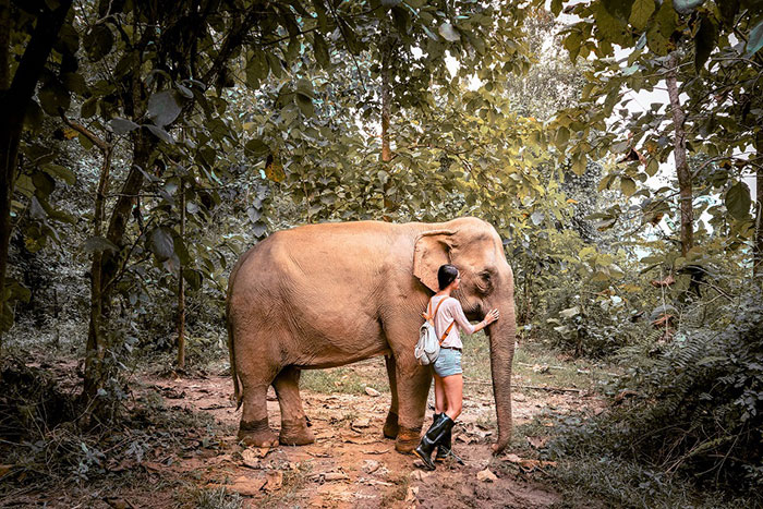 ecoturismo con elefantes en Luang Prabang Laos