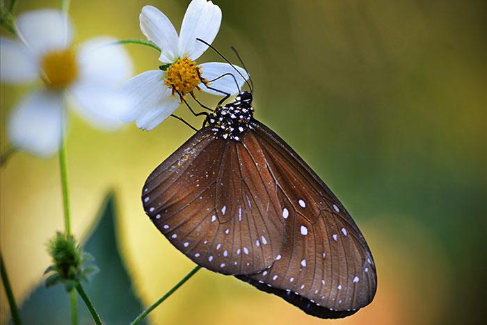Granja de mariposas en las cataratas de Kuang Si Laos