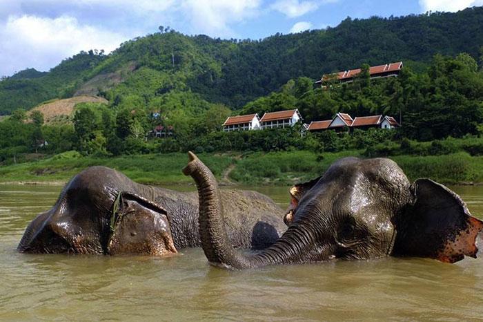 Parque de elefantes del Mekong en Pakbeng