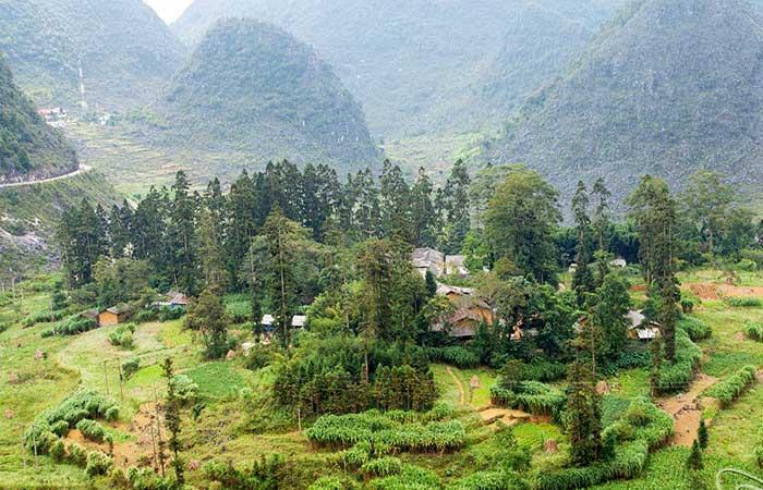 Campo en el palacio de la familia Vuong en Ha Giang