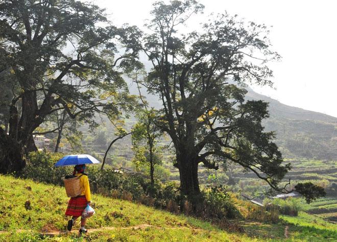 El campo en la region de Ha Giang