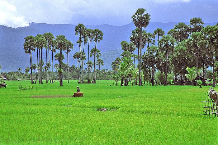 Isla de Trey KOh en Camboya
