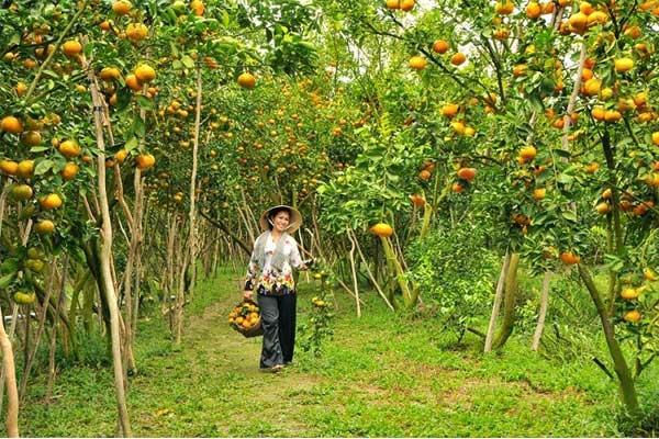 jardin-en-el-delta-mekong