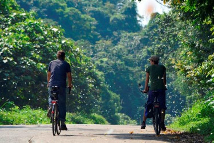 Mariposas en el Parque de Cuc Phuong en Ninh Binh