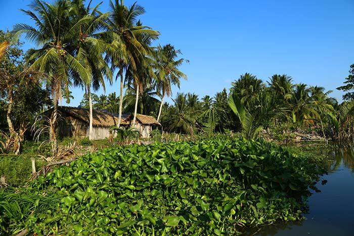 Fauna en Ben Tre Vietnam Delta del Mekong