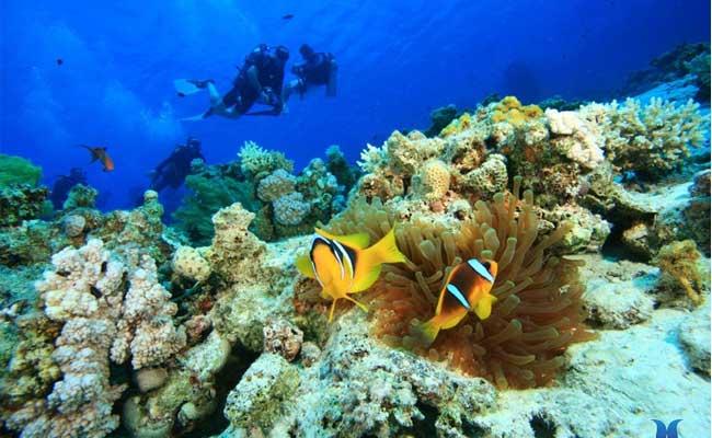 Islas Cham mejores islas de Vietnam