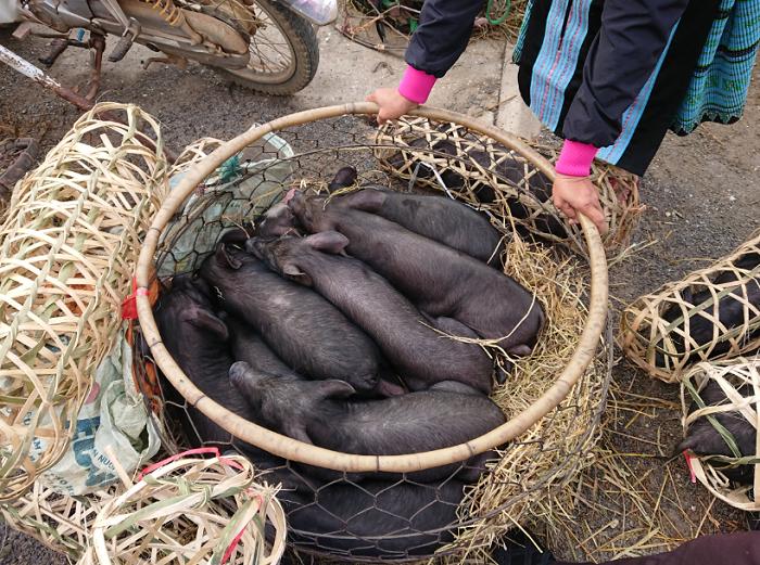 Venta de animales ne el Mercado Pa Co Mai Chau
