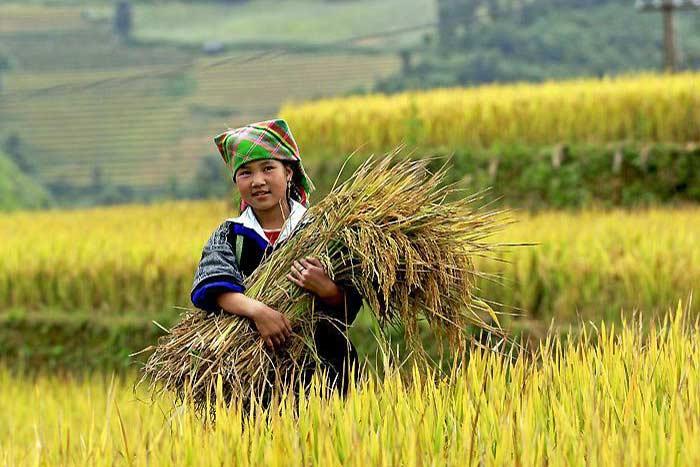 Mujer del grupo etnico hmong en Mu Cang Chai