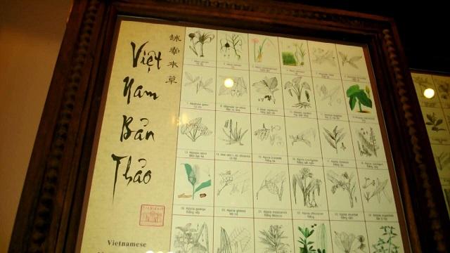 Plantas medicinales en el museo Fito de Saigon