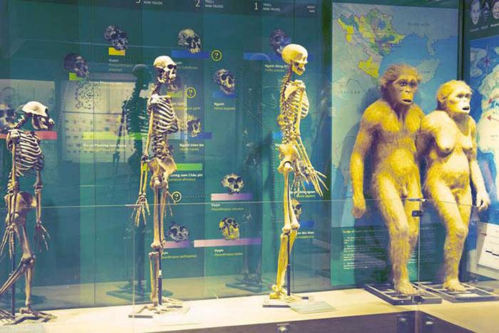Museo de la naturaleza en hanoi