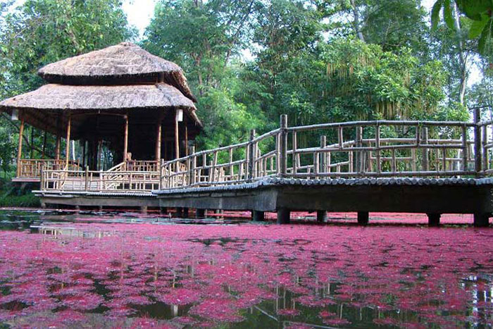 Estanque de loto en la pagoda Tu Hieu en Hue