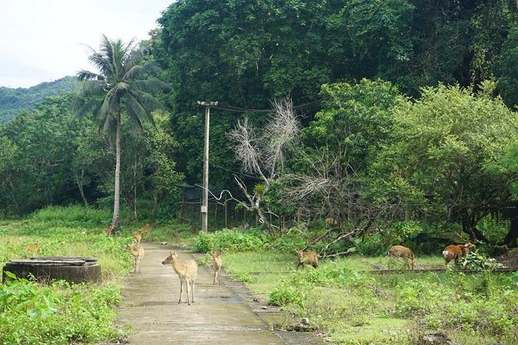 Flora y fauna en el Parque Nacional de Cat Ba
